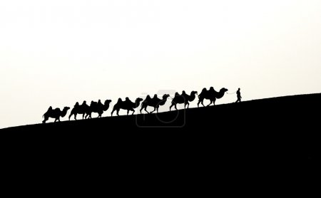 camel caravan in Xinjiang, China