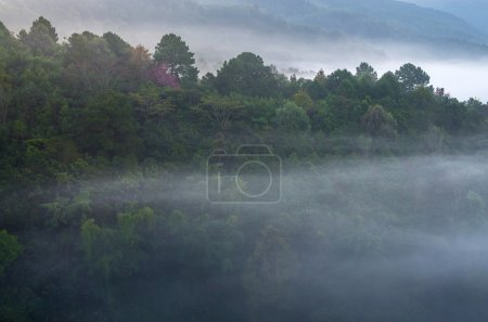 Misty tree forest on the mountain landscape in the morning, thai