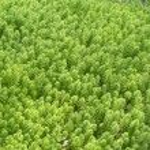 Green Moss background...