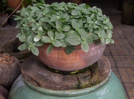 flower leaves in pot for decorate