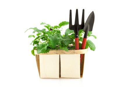 Photo pour Outils de jardin avec plantes isolés sur fond blanc - image libre de droit