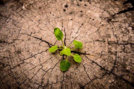 Foto de Un pequeño árbol en Stump. Nuevo desarrollo y renovación como concepto de negocio - Imagen libre de derechos