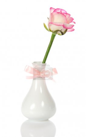 Rose in a vase decorated with a bow, isolated on white