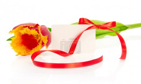 Tulip and card decorated by a tape, isolated on white