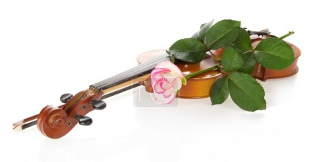 Photo for Violin and gentle rozy, isolated on the white - Royalty Free Image