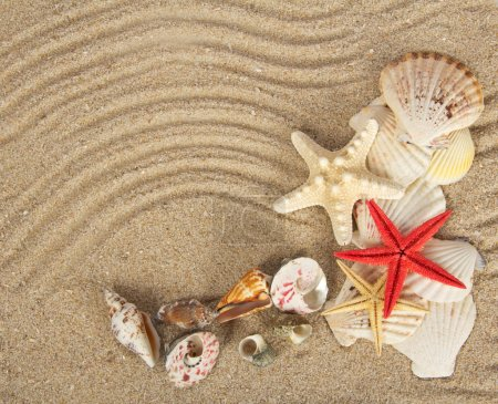 Beautiful cockleshells and starfishes on sand