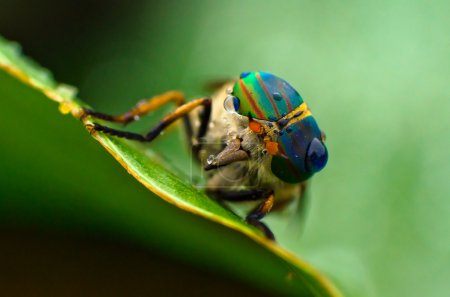 Horsefly on a leaf