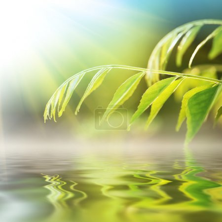 Photo for Green grass over water on sunny day. - Royalty Free Image