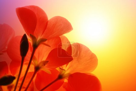 Photo for Red flower macro over white background - Royalty Free Image