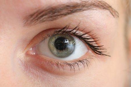 Photo pour Belle femelle oeil, gros plan macro. - image libre de droit