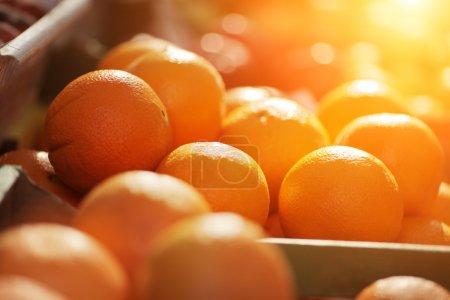 Photo pour Oranges biologiques fraîches exposées le jour ensoleillé. DOF peu profond . - image libre de droit