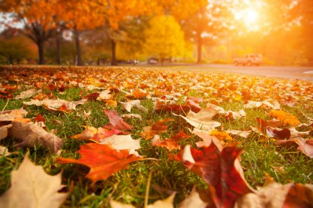 Photo for Yellow, orange and red autumn leaves in beautiful fall park. - Royalty Free Image