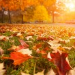 Yellow, orange and red autumn leaves in beautiful ...