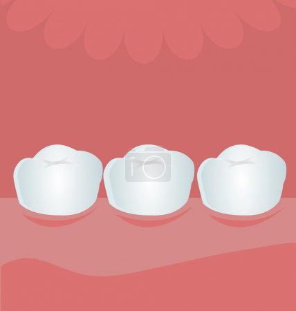 Healthy teeth in jaw. cartoon vector illustration