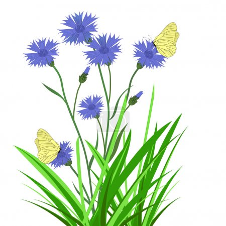 Illustration for Cornflowers wildflowers, butterflies and grass on a white background - Royalty Free Image