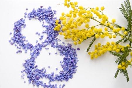 International Women's Day mimosa flower