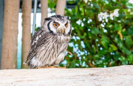 Owl bird on the park...