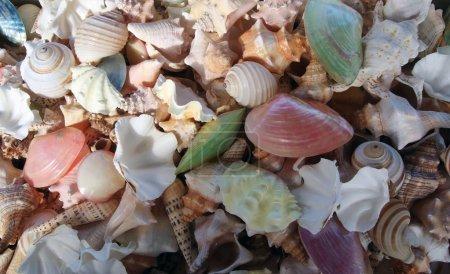 Photo pour Bouquet de coquillages sur la nature morte. Image peut être utilisé comme arrière-plan - image libre de droit