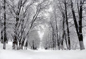 Winter park, krajina