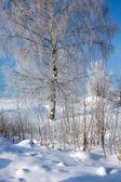 Krásná příroda, zima