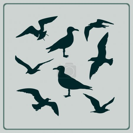 Illustration for Set of seagulls silhouettes - Royalty Free Image