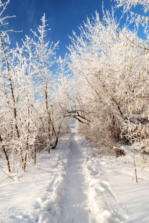 Photo for Road in the hoar frost covered valley against blue skyroad in the snow covered valley against blue sky - Royalty Free Image