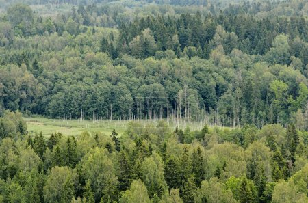 hills with forest