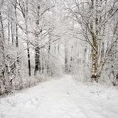 Zimní scény s jíní na stromech