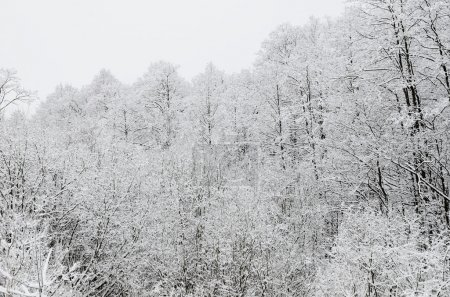 Winter scene with hoar-frost on trees