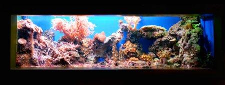 Marine aquarium on display in a zoo
