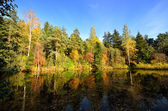 River and forest reflection scene in Fall