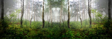 Photo pour Une forêt du Nord dans le brouillard. Lettonie - image libre de droit