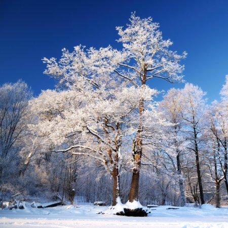 Photo pour Froid sur l'arbre - image libre de droit