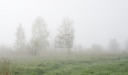 Rural landscape in fog