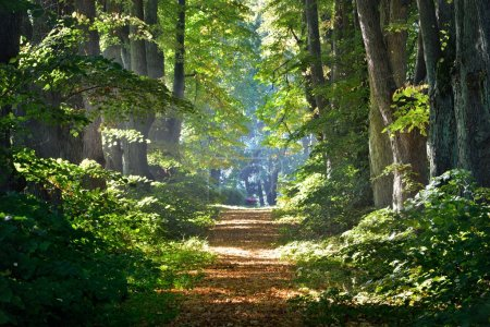 Photo pour Route dans une belle forêt le matin - image libre de droit