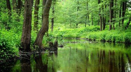 Forest river scene