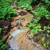 Small stream in green forest