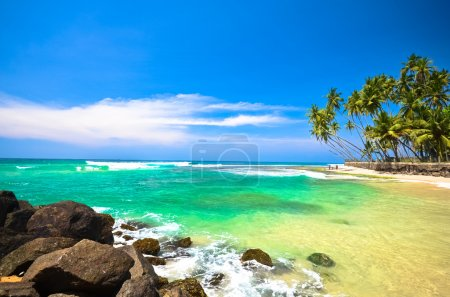 Photo for Beach side Sri Lanka with coconut trees - Royalty Free Image