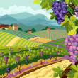 Rural landscape with vineyard and grapes bunches...