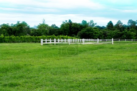 Farm land green grass with white fence
