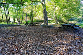 Wooden Picnic table in autumn forest among the fallen leaves