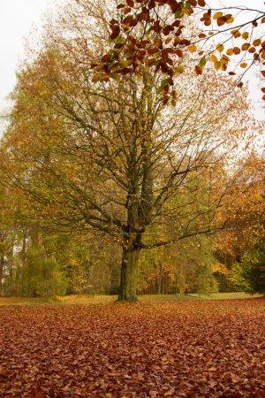 autumn leaves - Herbstlaub