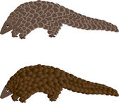 Pangolin or scaly anteater