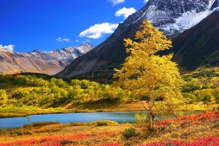 Photo pour Paysage d'automne sur le Kamtchatka au pied de la montagne avec une vue magnifique sur la rivière - image libre de droit