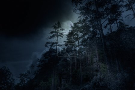 Photo for Mountain forest on a full moon overcast night - Royalty Free Image