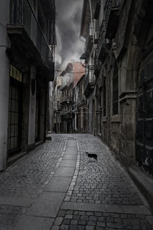 Photo for Surreal cityscape. Empty old street from Porto, Portugal, with a mysterious cat on the foreground. - Royalty Free Image