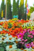 """Постер, картина, фотообои """"Цветы Яркие ромашки в саду"""""""
