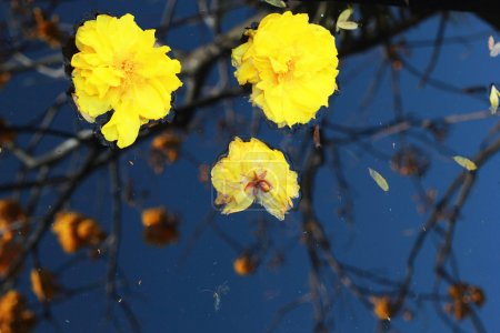 Yellow flowers floating in water.
