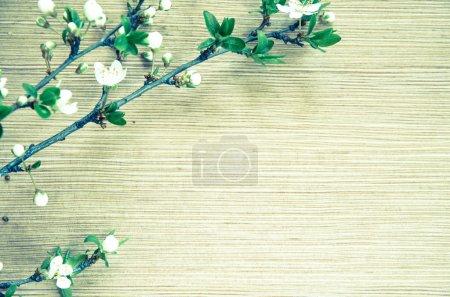 Foto de Blanca primavera floreciente fondo flor filtrado efecto retro - Imagen libre de derechos