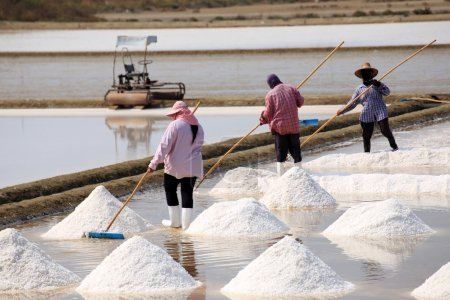 Photo for The Farmer working in the salt field - Royalty Free Image
